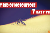 7 Easy Tricks to Treat Your House for Mosquitoes This Monsoon